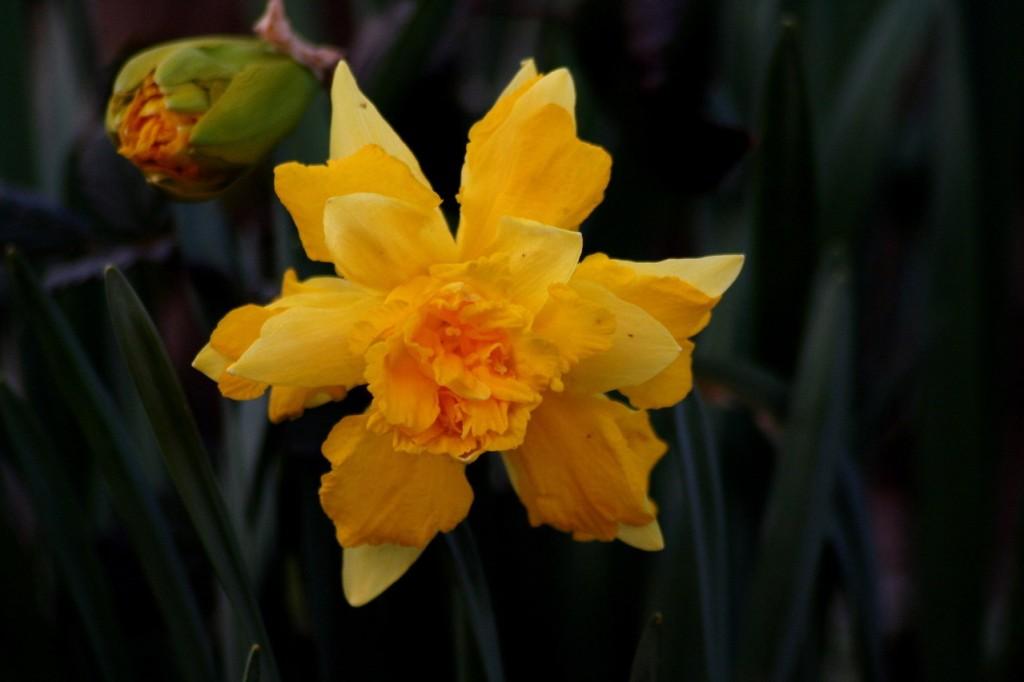 garden-flowers-1376706-1279x852