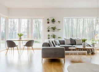 Salon z roślinami