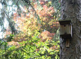 Karmniki dla ptaków MyBaze