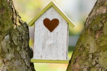 Ogród: karmniki dla ptaków