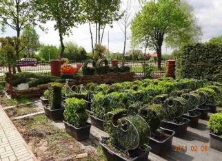 Topiary w ogrodzie