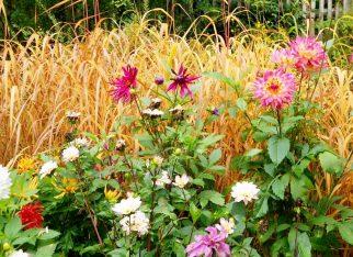 Ogród - trawy ozdobne