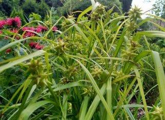 Ogród: trawy ozdobne