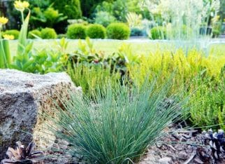 Trawy ozdobne i ich pielęgnacja