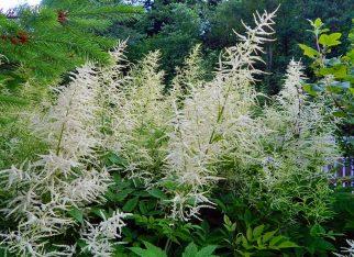 Jakie trawy ozdobne do ogrodu wybrać?
