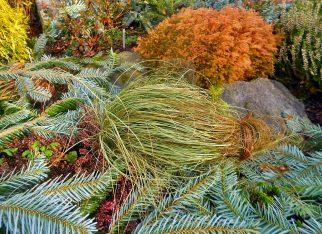 Kolorowe trawy ozdobne