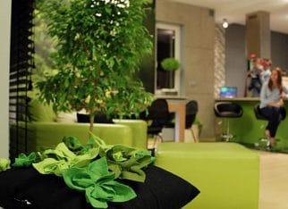 Zielona fototapeta w saloie