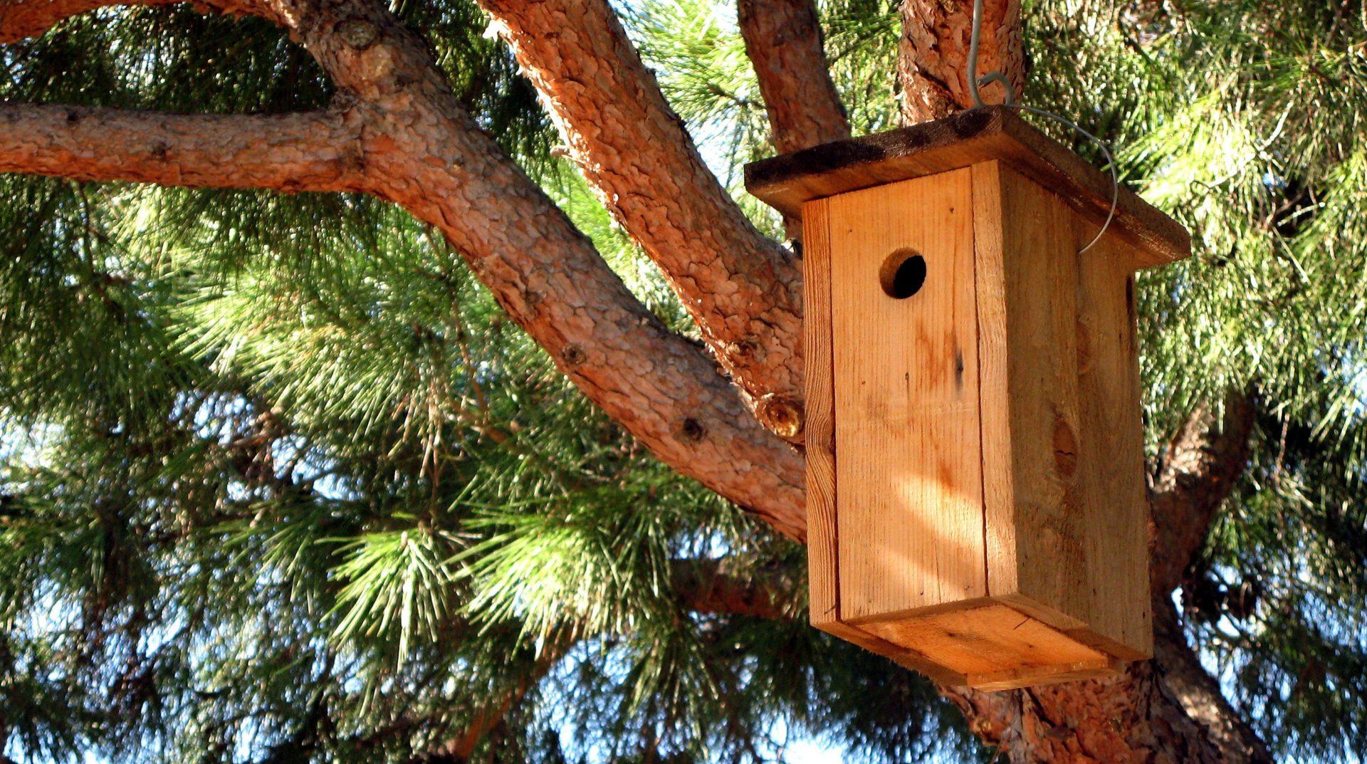 Karmniki dla ptaków do ogrodu