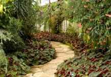Dobrze dobrane krzewy ozdobne w ogrodzie
