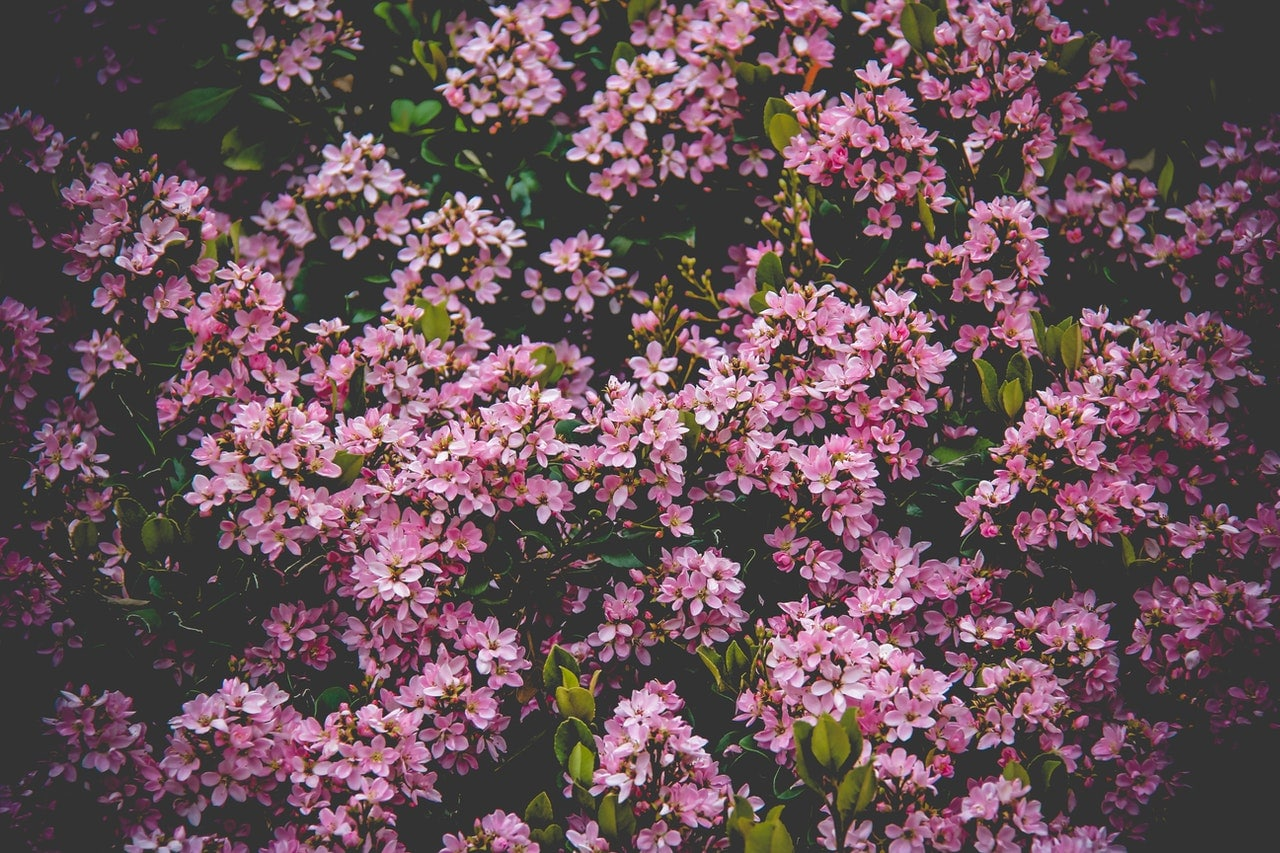 Piękny krzew ozdobny w ogrodzie