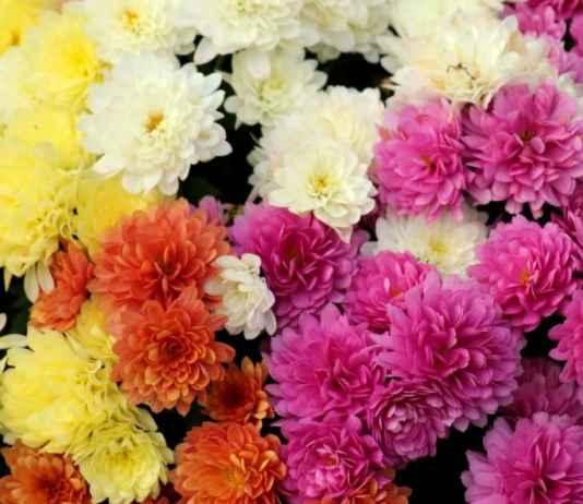 Kwiaty w ogrodzie - top3